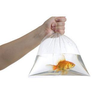 pedicur rybkami, rybki delayut pedicur, rybnuy pedicur, pedicur s garra rufa, garra rufa, ryba-doktor, pedicur s pomoshyu ryb, rybki dlya nog, pedicur pri psoriaze